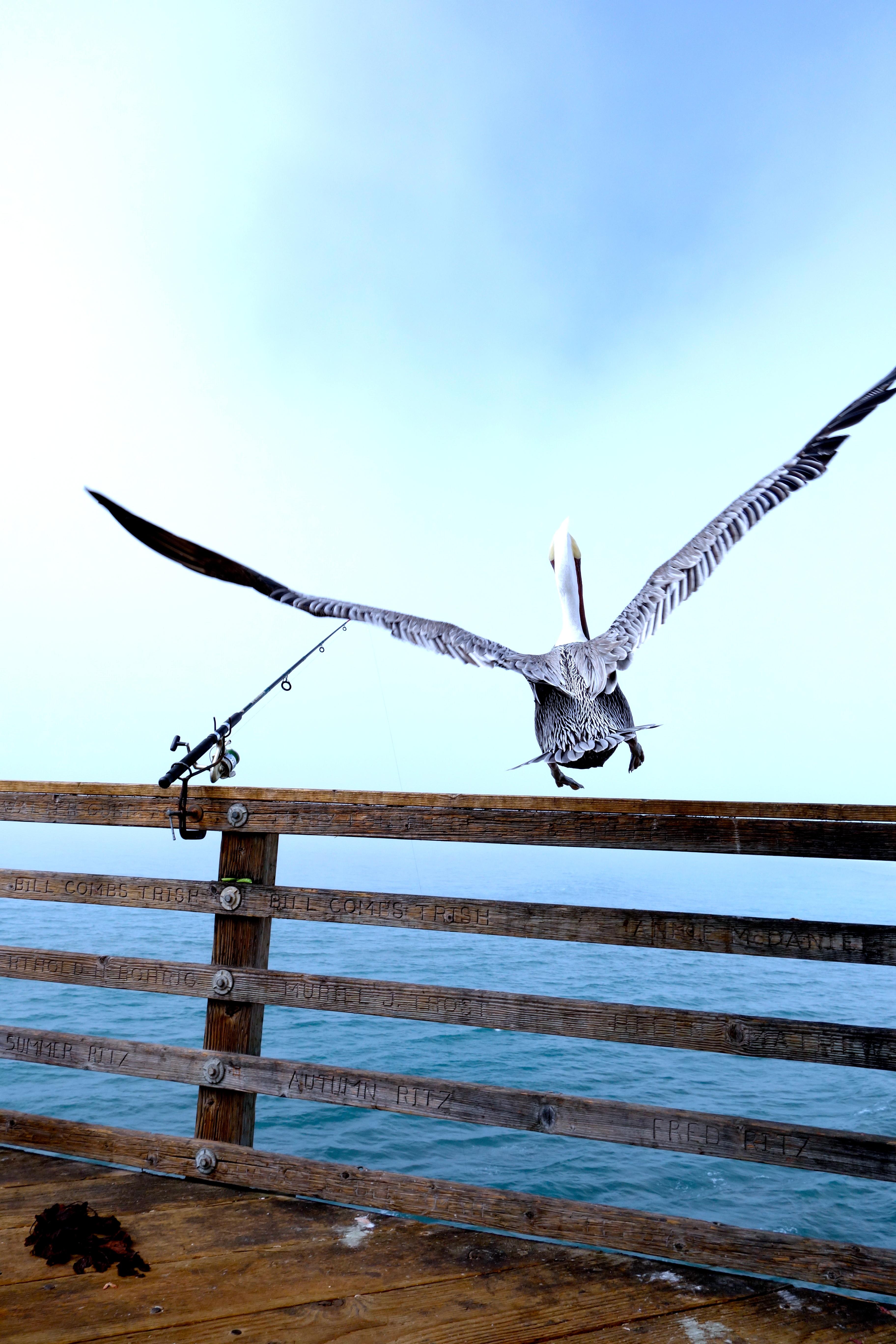Frei, wie ein Vogel!